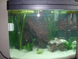 Substrate Aquascape Sulawesi Shrimp Tank Build
