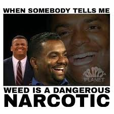 Best Weed Memes - 10 best weed memes for the week september 27 october 4