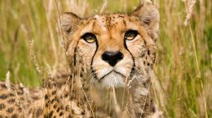 african wildlife desktop wallpaper wallpapersafari