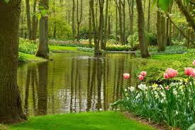 Ready For Spring by Essential Tips For Getting Your Pond Ready For Spring Swell Uk