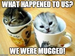 Funny Kitten Meme - funny kitten memes 18