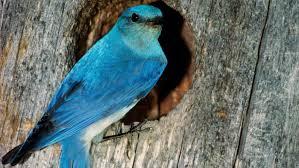 what does a bluebird symbolize reference com