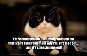Stressed Out Memes - stressed out meme im so stressed out over being stressed out cat