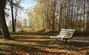 Park Bench Scene About Sundre