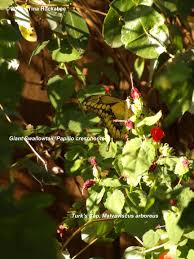 texas native plants database texas native plant week what u0027s next my gardener says u2026