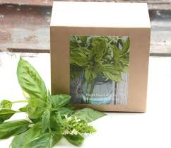 sweet basil seed kit diy kit garden kit basil seeds with