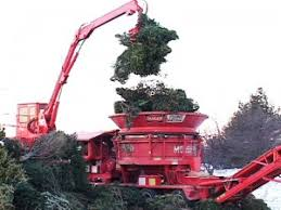 how and where to recycle or dispose your christmas tree after the