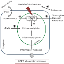 best medicine for inflammation emerging anti inflammatory strategies for copd european