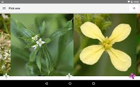what u0027s that flower android apps on google play