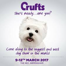 boxer dog crufts 2014 we u0027re off to crufts adventures of doodles