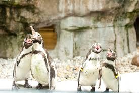 columbus zoo u0026 aquarium