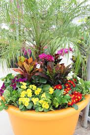 Container Gardening Business 45 Best Tropical Plants Images On Pinterest Edible Garden