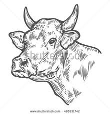 cow head stock images royalty free images u0026 vectors shutterstock