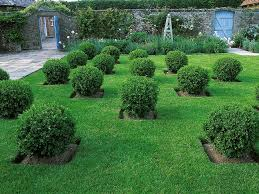 Small Shrubs For Front Yard - 25 ideas for fabulous boxwood designs hgtv