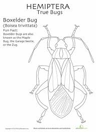 coloring pages insects bugs these are for the bug lovers learn the insect orders with fact