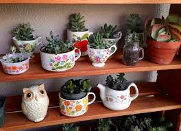 Succulent Gardens Ideas Best 25 Indoor Succulent Garden Ideas On Pinterest Indoor Indoor