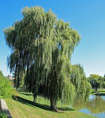 lessons from the willow tree findingstrengthtostandagain s