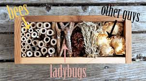 build a bug hotel garden therapy
