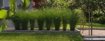 gartengestaltung mit steinen und grsern moderne gartengestaltung mit gräsern wapdesire wapdesire best