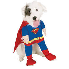 Halloween Costume Ideas For Pets Unique And Beautiful Halloween Costumes Ideas For Pets Family