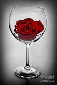 rose in glass wine glass with rose photograph by elena elisseeva