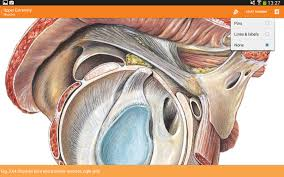 Visual Anatomy And Physiology Pdf Sobotta Anatomy Atlas Android Apps On Google Play