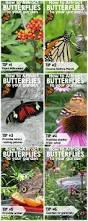 Monarch Design by Best 20 Monarch Butterfly Garden Design Monarch Butterfly
