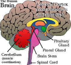 Role Of Brain Stem Accessing Higher Consciousness