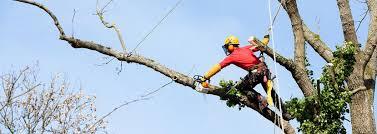 tree service lawn service santos outdoor maintenance lawn