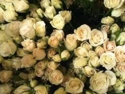 global roses anybody had a or bad experience with global weddingbee