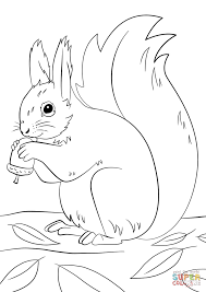 squirrel preparing for winter coloring page free printable