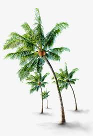 tropical png images vectors and psd files free on pngtree