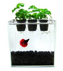 aquaponics is a system where the waste produced by fish or other