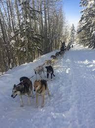 Dogsledding break and photo opportunity Jackson Hole s Continental