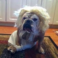 English Bulldog Halloween Costumes Send Bulldog Halloween Collection Upload