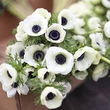 anemone flowers anemone bulk wholesale flowers miami flower market