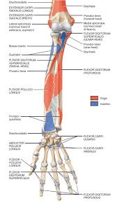Fundamental Anatomy And Physiology 71 Best Athletic Training Images On Pinterest Massage Therapy