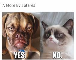 Funny Cat And Dog Memes - best 50 funny cat vs dog memes images to prove who s boss page 8