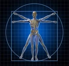 Human Anatomy And Physiology Review Human Anatomy Physiology Wiki Android Apps On Google Play