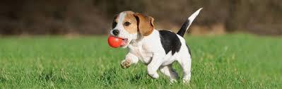 amazon com toys dogs pet supplies squeak toys chew toys