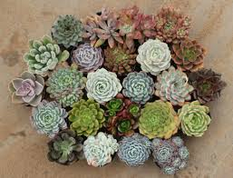 Flower Pot Wedding Favors - 2 5
