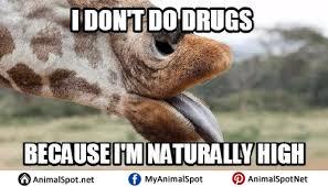 Meme Giraffe - meme giraffe png