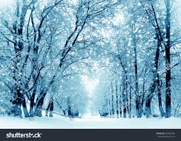 winter scenery frosty trees city park stock photo 343037693