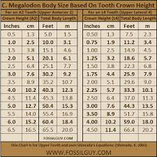 Feet In Meter The Size Of Megalodon Sharks Megalodon Tooth Size Vs Body Size