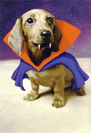 Halloween Costumes Miniature Dachshunds 117 Weiner Dogs Images Weiner Dogs