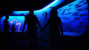 the awe inspiring monterey bay aquariumoic moments oic moments