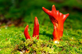 7 of the world u0027s most poisonous mushrooms britannica com