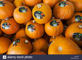 halloween pumpkins for sale at asda uk stock photo royalty free