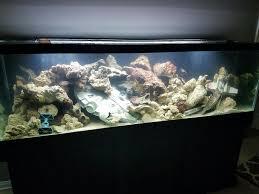 125gl wars aquarium saltwater aquarium design