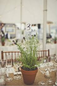 Potted Plants Wedding Centerpieces by 140 Best Windmill Flowers Images On Pinterest Dried Flowers